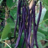 FARM RAISED ORGANIC NON-GMO STRINGLESS PURPLE FRENCH GREEN BEAN SEEDS LOW S&H