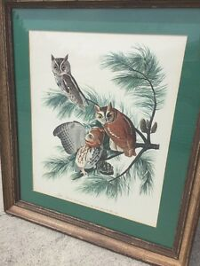 Antique ART WORK Framed Vintage Picture LITTLE SCREECH OWLS in JERSEY PINES