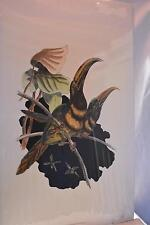 2002 NEW Sealed Art #9480 The Many-Banded Aracari Bird Old World Print Frame