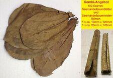 "100 Gram ~9"" Indian Almond Catappa Leaves + 2 Catappa Bark Tubes FREE SHIPPING"