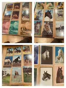 190+ Animal swap playing cards 1970's Vintage Horses Dogs Cats - Bulk Lot