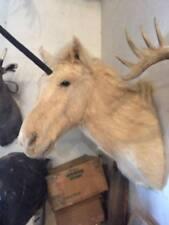 Unicorn Taxidermy mount wall sculpture weird bizare tattoo mistical animal