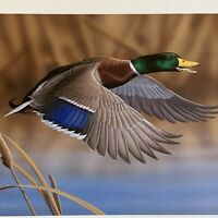 Artist John Brennan LE Print Brisk Retreat Idaho Ducks Unlimited Signed Mallard