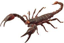 Framed Print – Scorpion (Picture Poster Predator Arachnid Lizard Spider Snake)