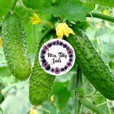 Snack Gurke Bio Gurkensamen 10 milde knackige Sorte robust sehr ertragreich