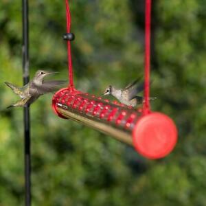 Best Hummingbird Feeder Birds Feeding Pipes Easy to Use