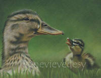 Reproduction of a drawing of ducks 8 X 10 Inches