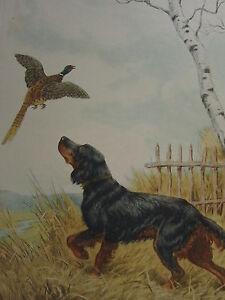 1935 PRINT PHEASANT HAND SIGNED PAUL WOOD DOG ETCHING