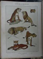 Lithographie Etudes d'animaux ROLPH Art nouveau - Album de la Décoration - V3