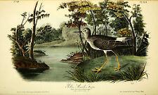 Audubon's Birds of America Complete 7 volumes 500 color plates on 3 DVD