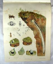Harvesting Ants & Trap-Door Spiders, With Supplement,Moggridge,Pickard-Cambridge