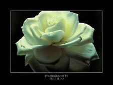 True Redd POSTER Rose Stampa d'Arte Immagine 60x80cm