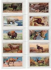 1924 Complete Set of 50 Wildlife Paintings Cards Llama Buffalo Penguin +++