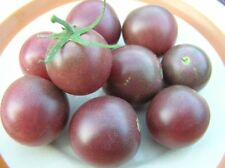 Black Cherry tomato - Blight-resistant strain of this heirloom, great flavor