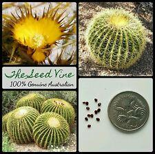 10+ GOLDEN BARREL CACTUS SEEDS (Echinocactus grusonii) Cacti Hardy Desert