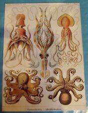 Art print Affiche Poster Octopus Poulpe Pieuvre tentacule ventouse mythologie
