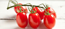 🍅 Baby Red Plum Tomato 🍅 60-Fines Seeds🍅Sweet & Aromatic 🍅UK