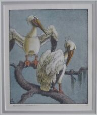 BENSON B MOORE Litho Pelicans Everglades Florida Southern Artist Auctions To 23K