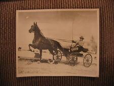 "Roadster Buggy Champion Standardbred ""Senator Playboy"" Vintage Horse Photo"