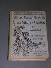 Algues E. Wuitner Les algues marines des côtes de France 1921 gravures