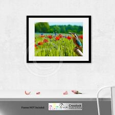 Kingfisher Bird Poppy Landscape Photo Poster Print ONLY Wall Art Size A4