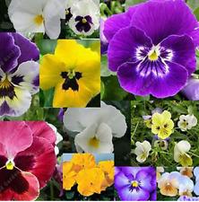 100Pcs Primrose Rainbow Flower Seeds Colorful Kinds Bonsai Perennial Room Plant