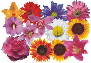 Blumen Aufkleber Flower Power Auto Aufkleber: Flower Set 08-Mini-36 Stück
