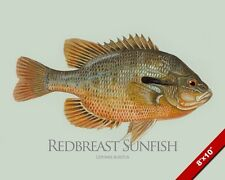 REDBREAST SUNFISH FISH PAINTING AMERICA FRESHWATER FISHING ART REAL CANVAS PRINT