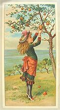 Vintage Victorian Trade Card - Young Girl Picking Apples