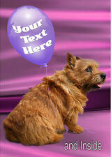 PERSONALISED NORWICH TERRIER DOG BIRTHDAY ANY OCCASION CARD  Blue or Pink
