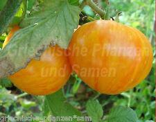 COPIA Tomate*Fleisch-Tomaten gelb rot gestreift*10Samen