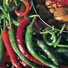 Pack Kings Vegetable Seeds Pepper (Chilli Pepper) 'Long Slim' Garden Seed