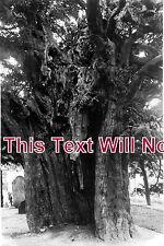 DR 12 - The Old Yew Tree, Doveridge, Derbyshire - 6x4 Photo