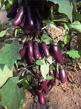 70 Semi/Seeds MELANZANA a Grappoli Sott'olio