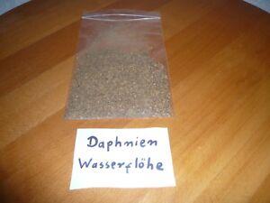 80 ml Daphnien Wasserflöhe Fischfutter , Futter für Reptilien   (16,00€/L)