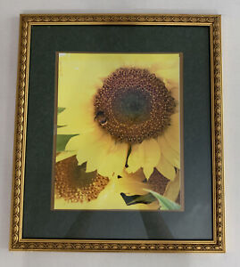 """Bumble Bee Sunflower Photograph 9x11"""" Matted Wall Hanging Gold Gilt frame 15x17"""
