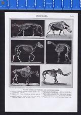 Ungulates: Extinct Animals of Tertiary & Quaternary Times - 1950s Science Print