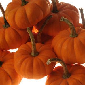 Pumpkin JILL-BE-LITTLE-Pumpkin Seeds- GREAT TO BAKE IT WHOLE-12 SEEDS