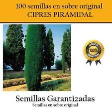 100 Graines de Cyprès Pyramide Pochette Original