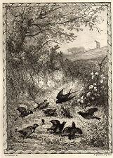 EAU FORTE / Fables de la Fontaine 1883 / L'IRONDELLE ET LES PETITS OISEAUX