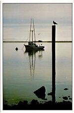 Peaceful Bay Northern California Coast Postcard Boat Bird Water Unposted