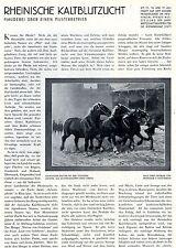 Rheinische Kaltblutzucht Musterbetrieb Jos. Zilcken- Golzheim Kreis Düren 1927