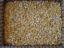 DEER CORN WHOLE KERNEL CORN 25 LBS DEER BIRDS TURKEYS SQUIRRELS