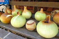 Walla Walla Onion Seed Sweet BIG Onions 100 Winter Vegetable Seeds Australia