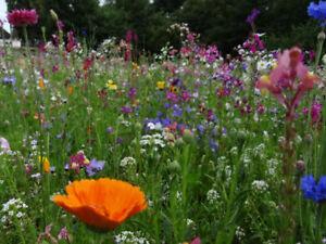 20qm Blumenwiese 22.500 Samen aus 65 mehrjährige Arten Wildpflanzen Bienen Wiese