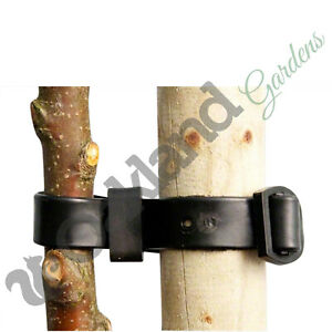 45cm + 60cm Rubber Tree Ties Buckle Strap Plant Support Whip Bare Root Straps
