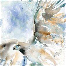 Carol Robinson: Hawk on Blue Fertig-Bild 30x30 Habicht Vogel Tiere Aquarell blau