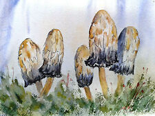 Shaggy Ink Caps, Mounted Water Colour Painting signed & dated 2015.