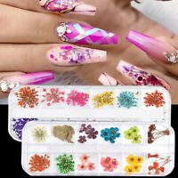 12 Colors Real Dried Flowers 3D Nail Art Decors Design DIY Tips Manicure HOT