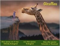 "The African Giraffe, an Endangered Species card by ""PostcardsTo SaveThePlanet"""
